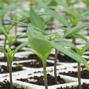 vermicoco recubridor de semillas