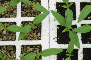 vermicoco vs vermiculita