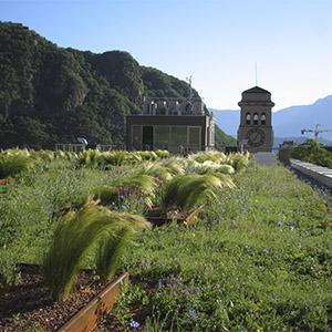 cubierta-vegetal-extensiva