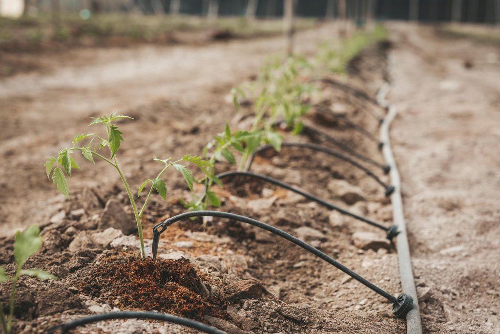 fibra de coco en suelo agrícola