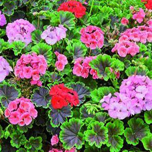 sustrato plantas ornamentales