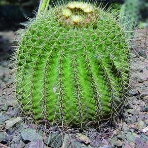 sustrato_cultivo_maceta_cactus