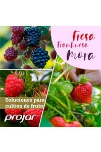 CULTIVO FRESA, FRAMBUESA Y MORA