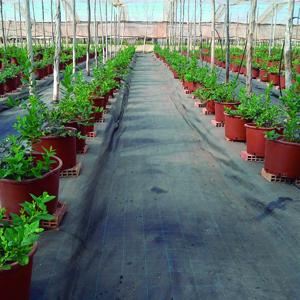 malla antihierbas Horsol Berryline para cultivos de berries