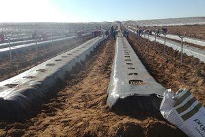 mejorado suelo arandano con turba