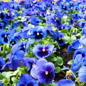 sustrato_para_cultivo_ornamental