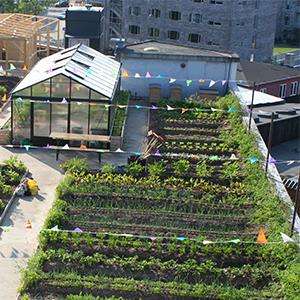 sistema de cubierta ajardinada para huerto urbano URBAN FARM