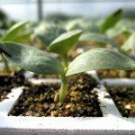 turba para semillero de kekkila